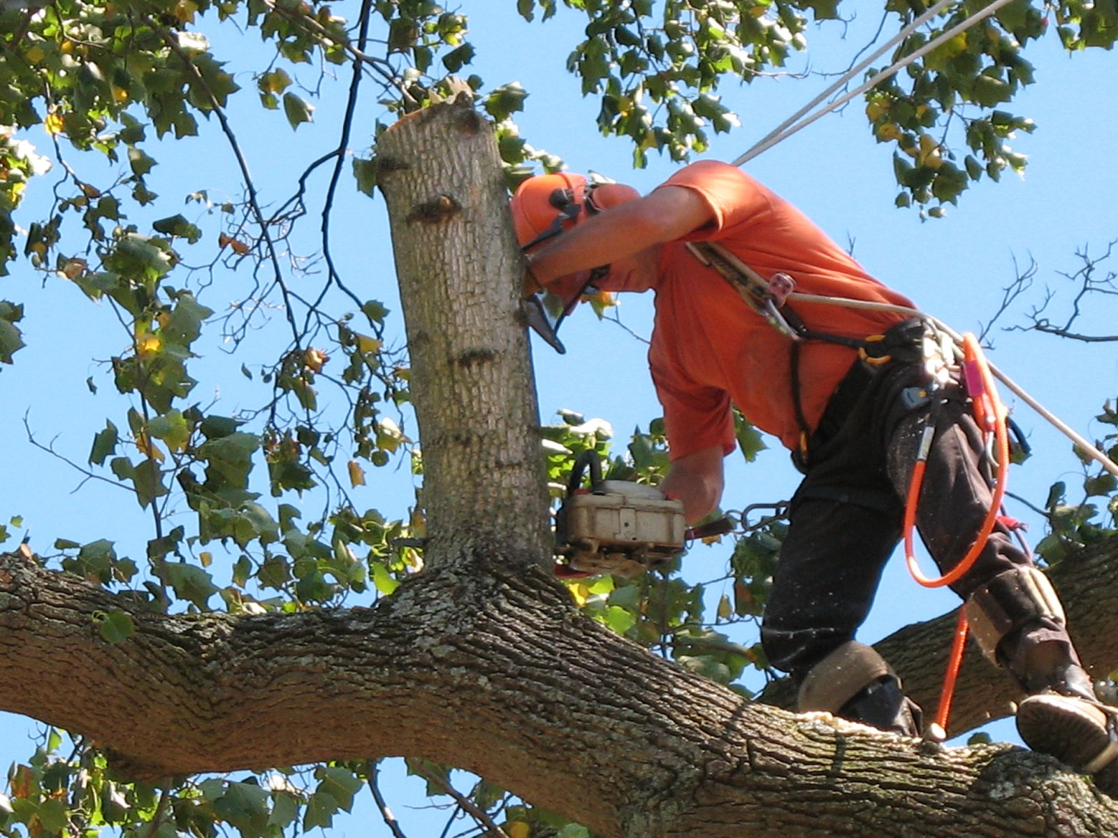 tree service in new york tree removal tree trimming stump grinding. Black Bedroom Furniture Sets. Home Design Ideas